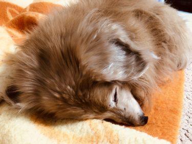 リタライフは犬や猫も入浴可能!ペットにも水素風呂の効果はある?!